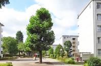 立川幸町団地